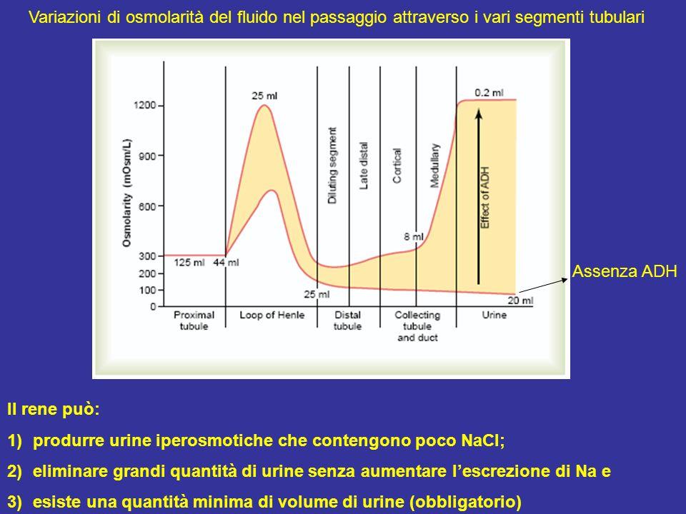 Variazioni di osmolarità del fluido nel passaggio attraverso i vari segmenti tubulari