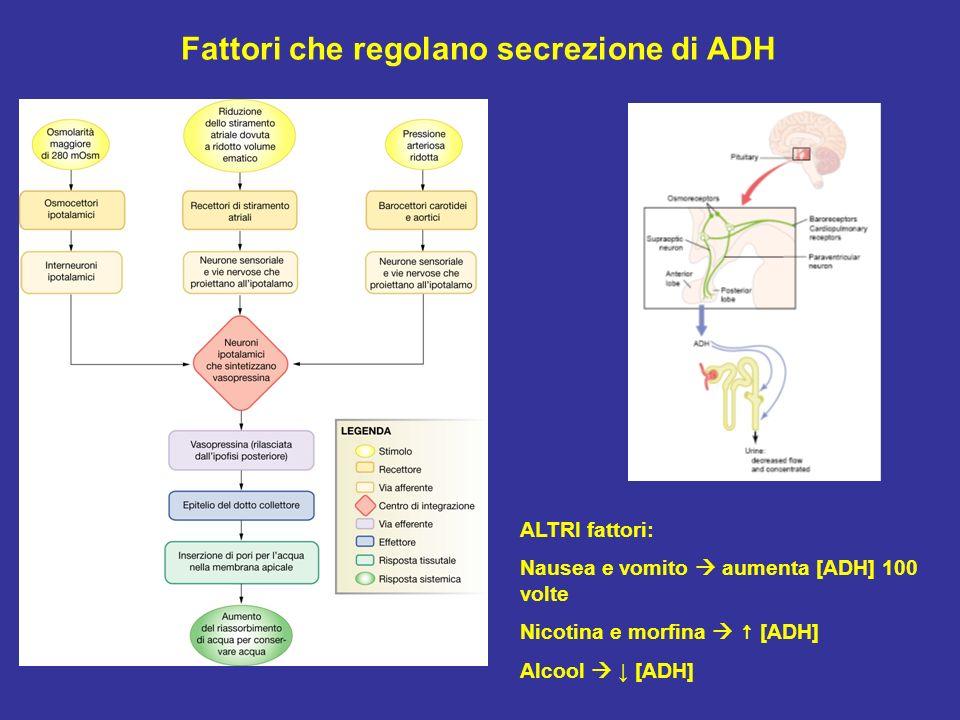 Fattori che regolano secrezione di ADH