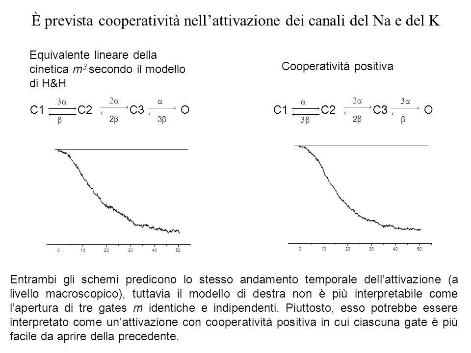 È prevista cooperatività nell'attivazione dei canali del Na e del K
