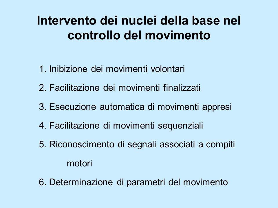Intervento dei nuclei della base nel controllo del movimento