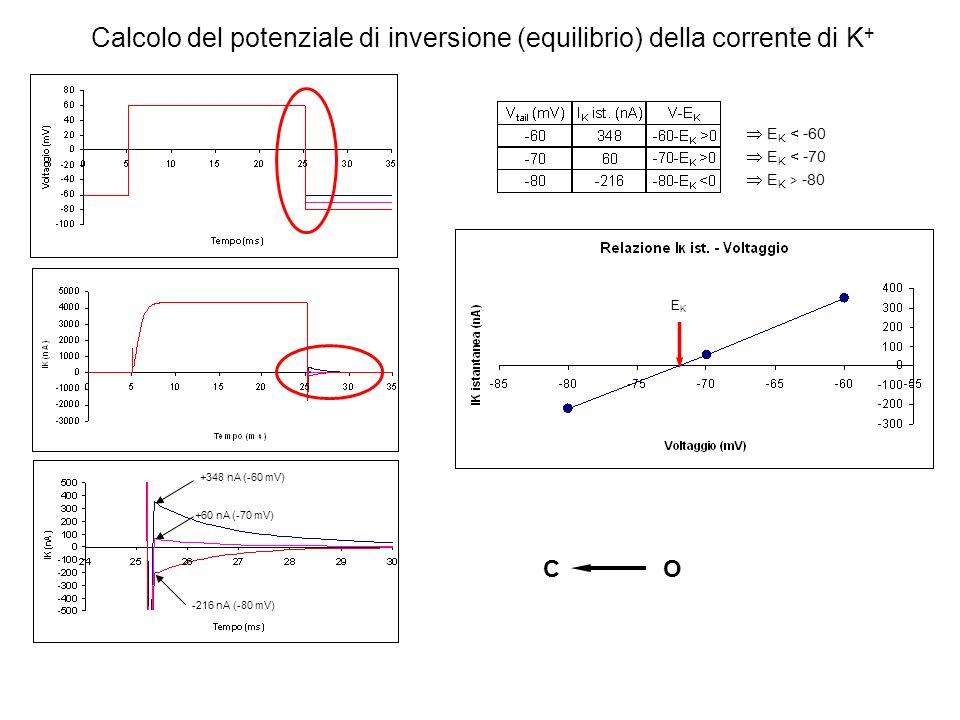 Calcolo del potenziale di inversione (equilibrio) della corrente di K+