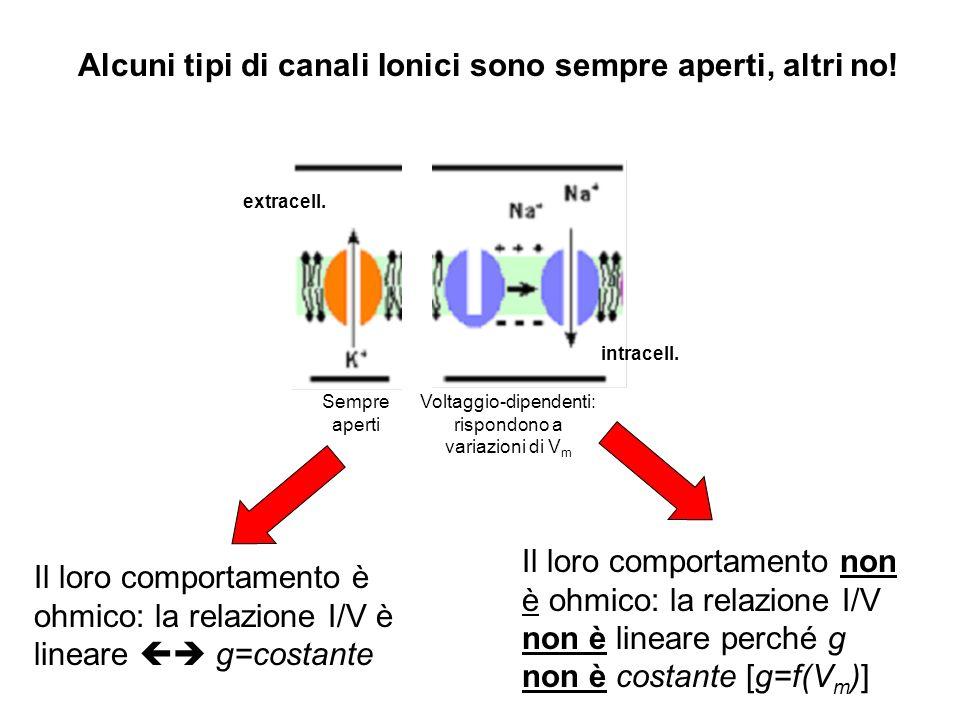 Alcuni tipi di canali Ionici sono sempre aperti, altri no!