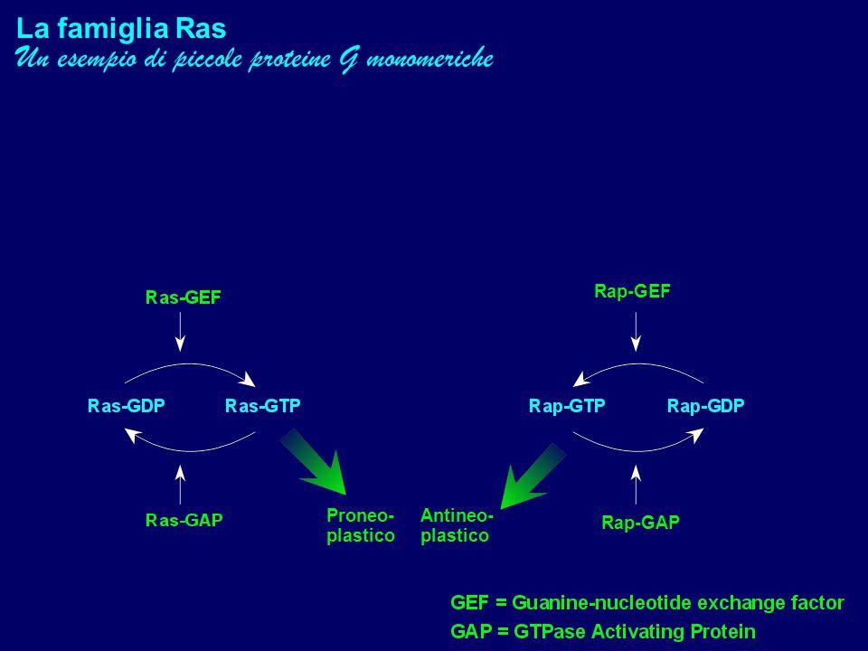 Un esempio di piccole proteine G monomeriche