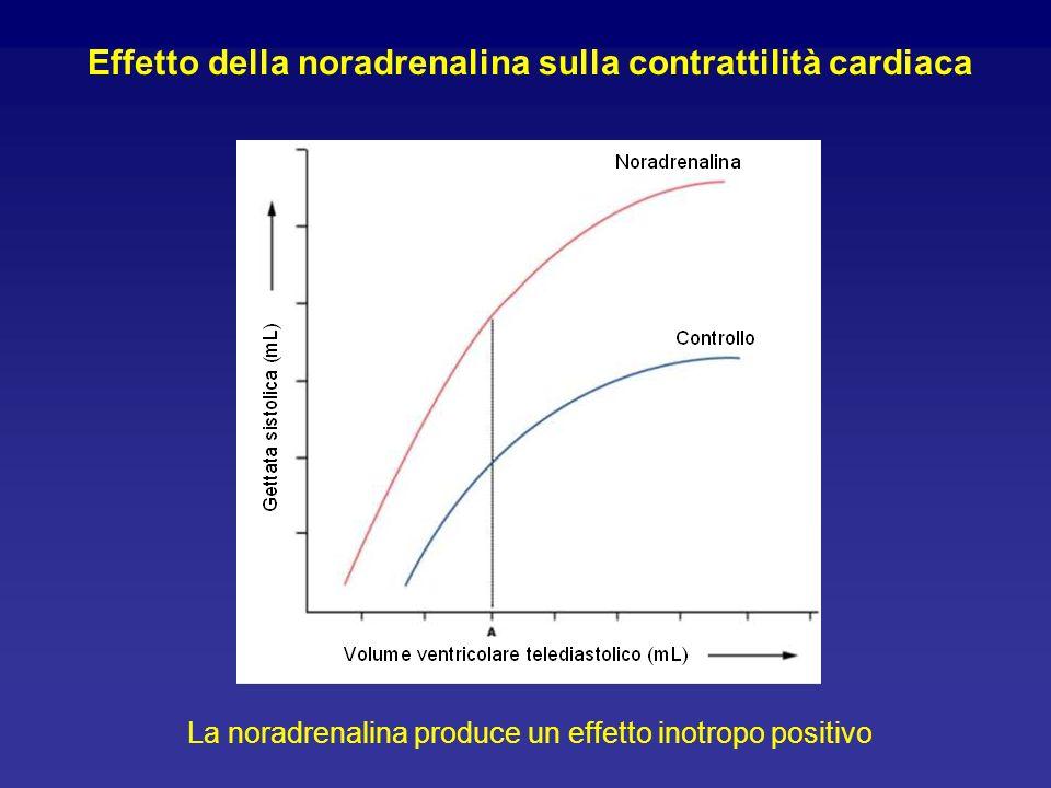 Effetto della noradrenalina sulla contrattilità cardiaca