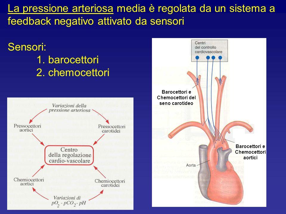 La pressione arteriosa media è regolata da un sistema a feedback negativo attivato da sensori