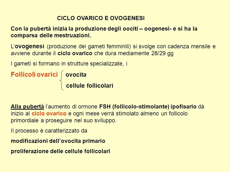 Follicoli ovarici ovocita