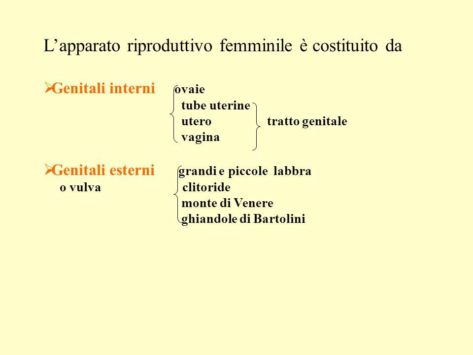 L'apparato riproduttivo femminile è costituito da
