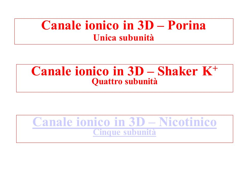 Canale ionico in 3D – Porina
