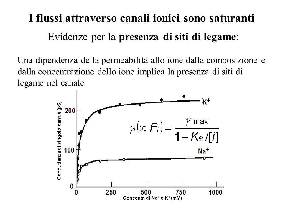 I flussi attraverso canali ionici sono saturanti