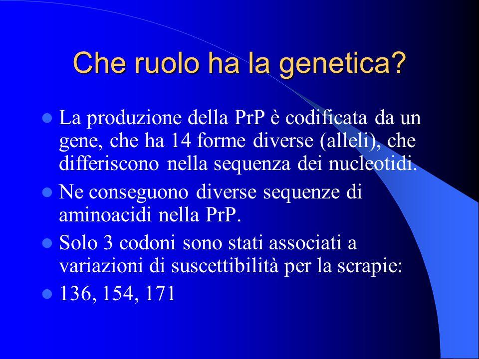 Che ruolo ha la genetica