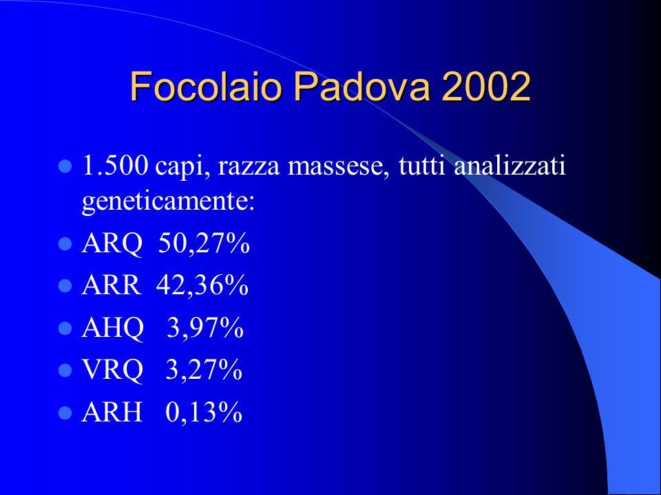 Focolaio Padova 2002 1.500 capi, razza massese, tutti analizzati geneticamente: ARQ 50,27% ARR 42,36%