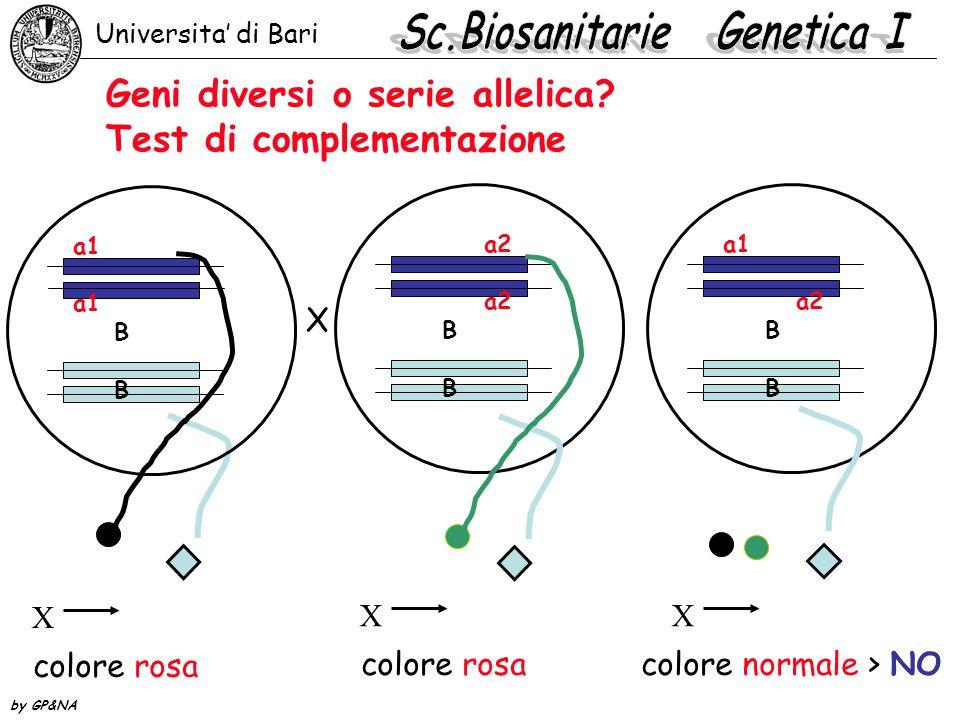 Geni diversi o serie allelica Test di complementazione