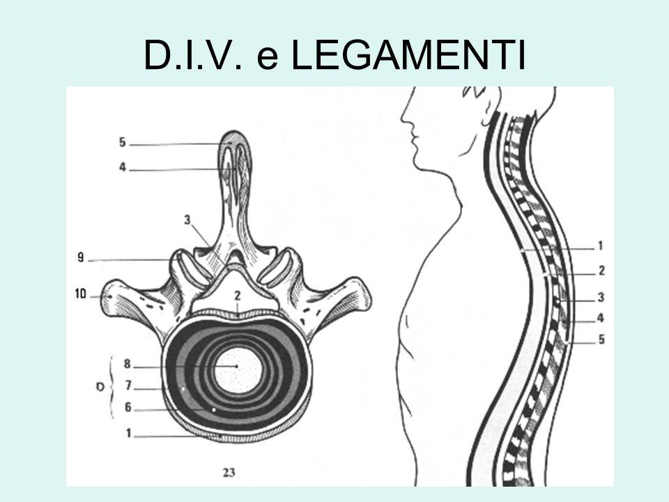 D.I.V. e LEGAMENTI