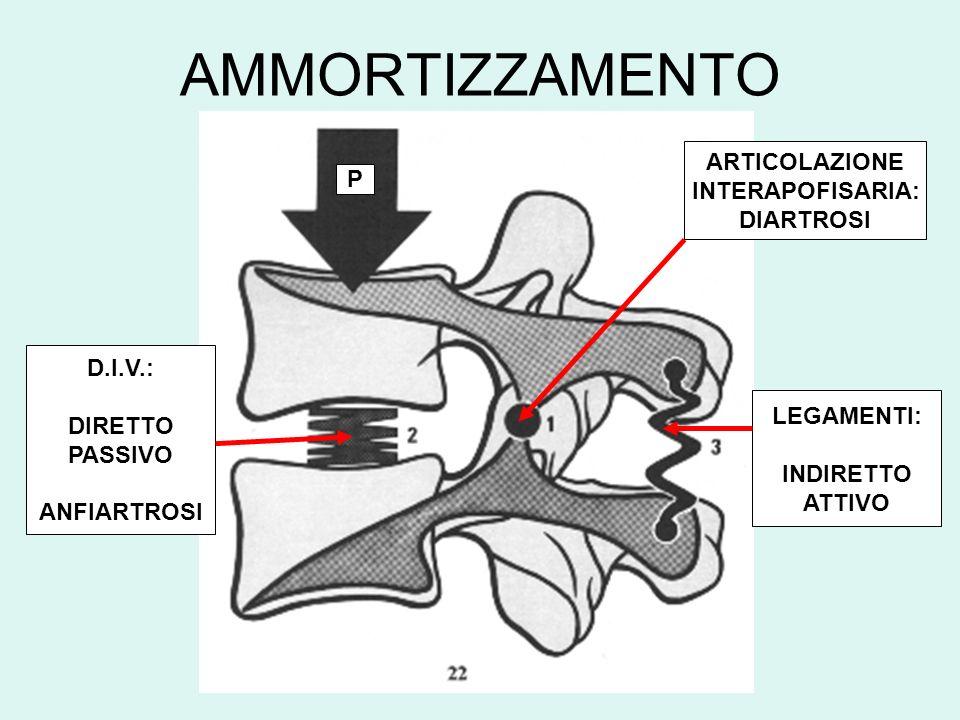 AMMORTIZZAMENTO ARTICOLAZIONE INTERAPOFISARIA: P DIARTROSI D.I.V.: