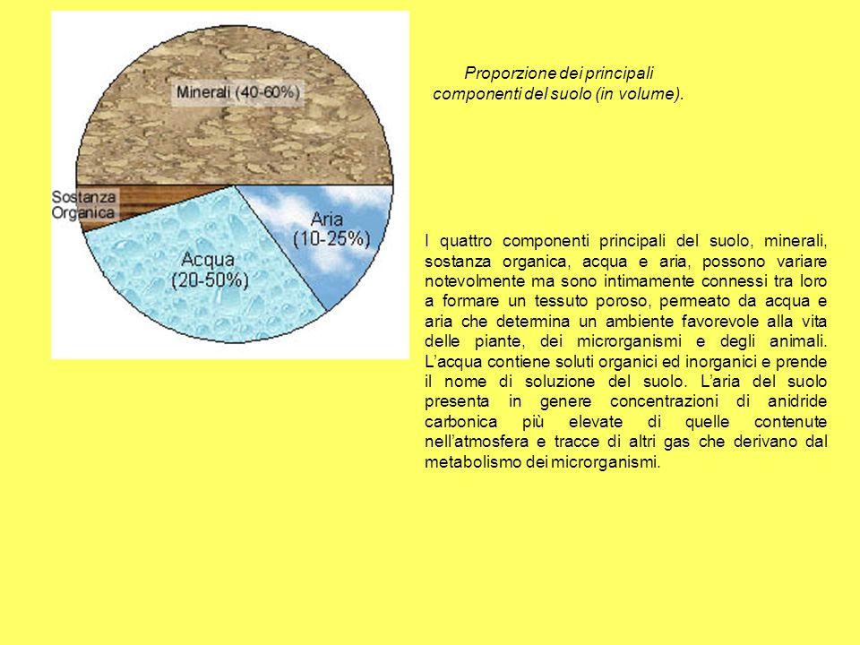 Proporzione dei principali componenti del suolo (in volume).
