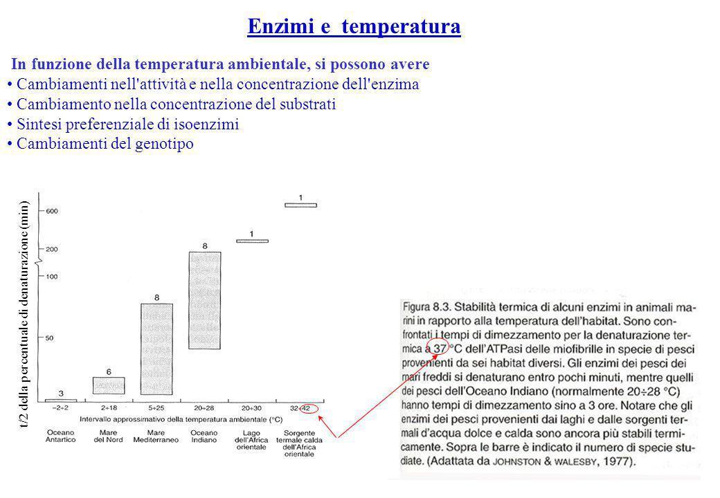 Enzimi e temperatura In funzione della temperatura ambientale, si possono avere. Cambiamenti nell attività e nella concentrazione dell enzima.