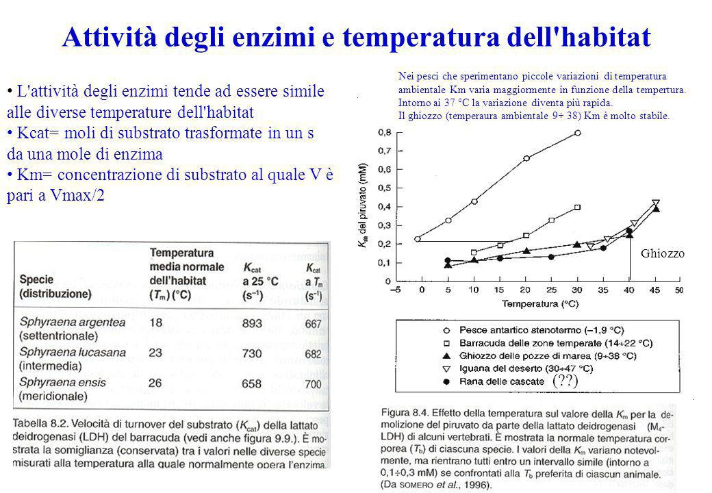 Attività degli enzimi e temperatura dell habitat