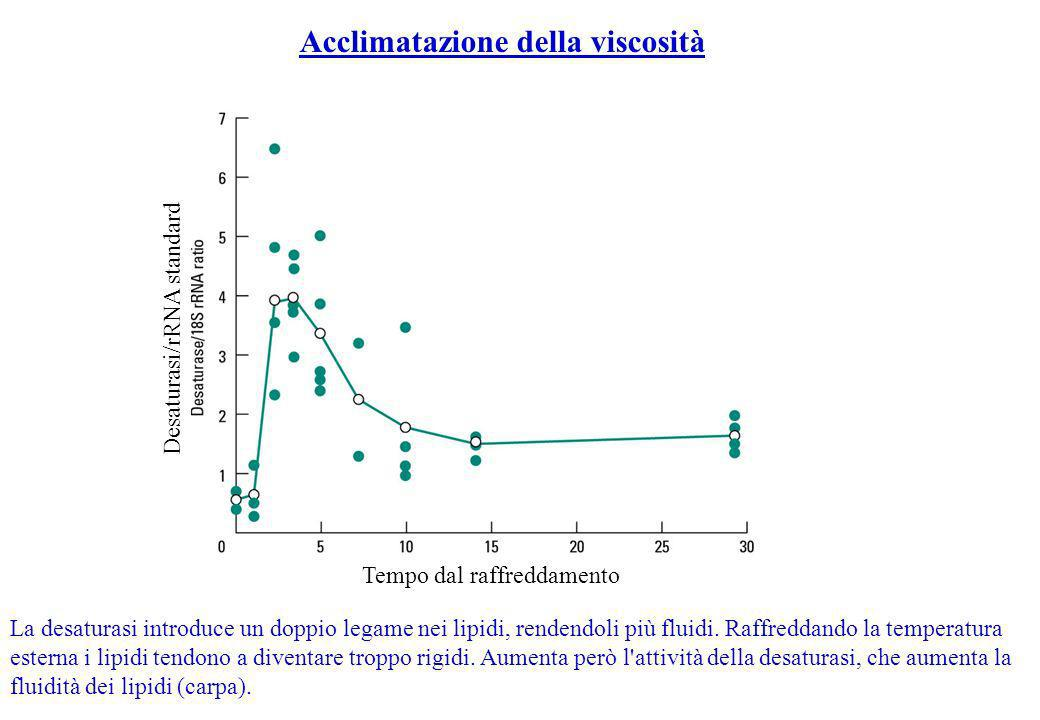 Acclimatazione della viscosità