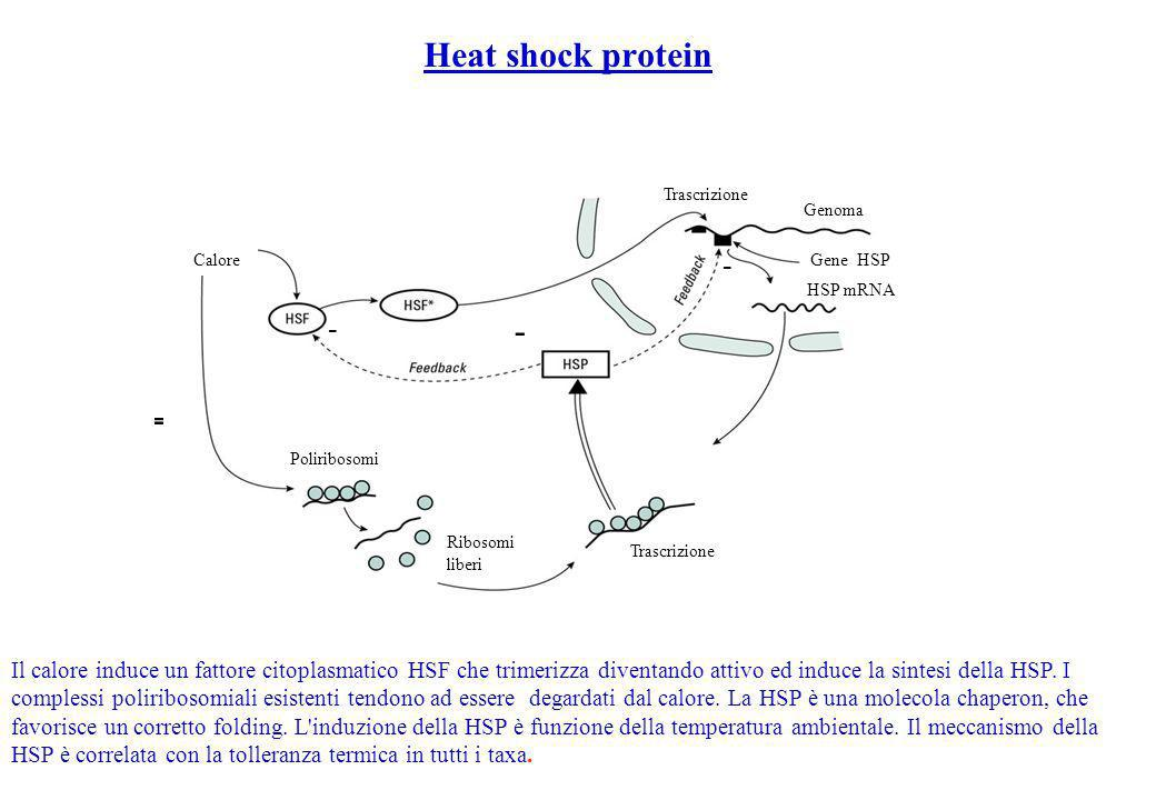 Heat shock protein - - - - -