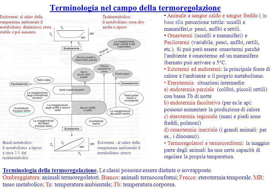 Terminologia nel campo della termoregolazione
