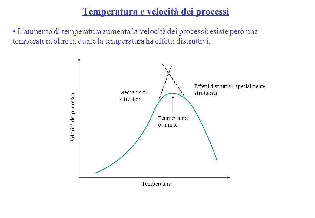 Temperatura e velocità dei processi