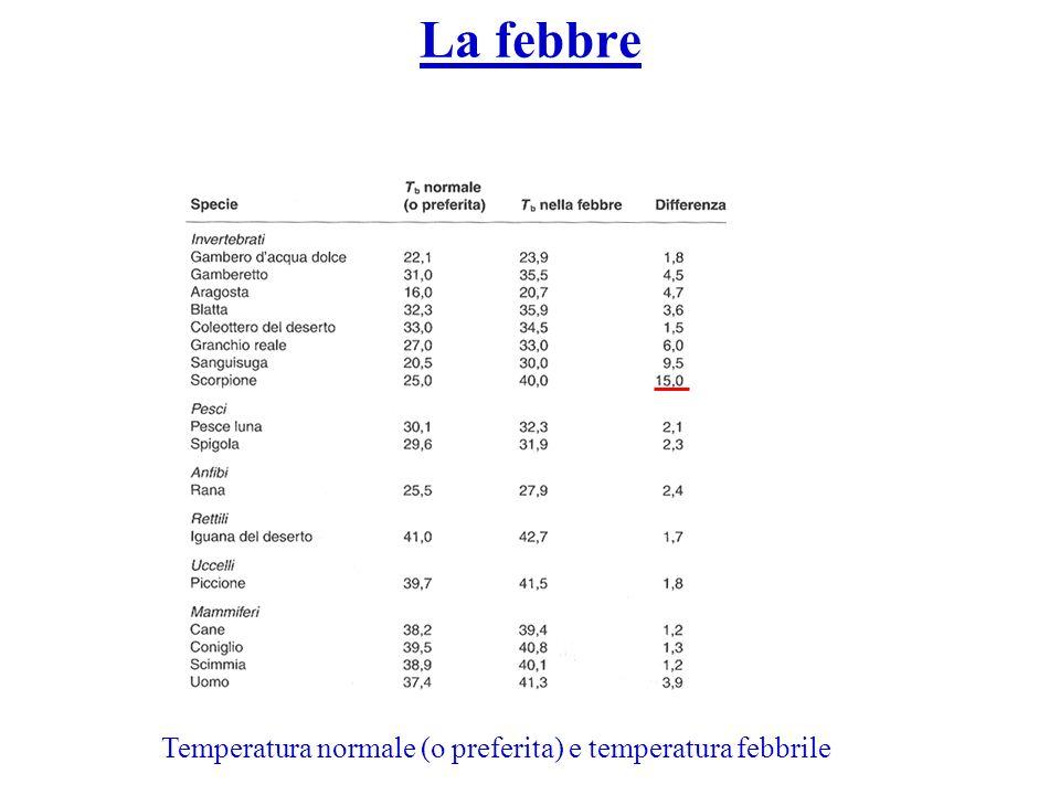 La febbre Temperatura normale (o preferita) e temperatura febbrile