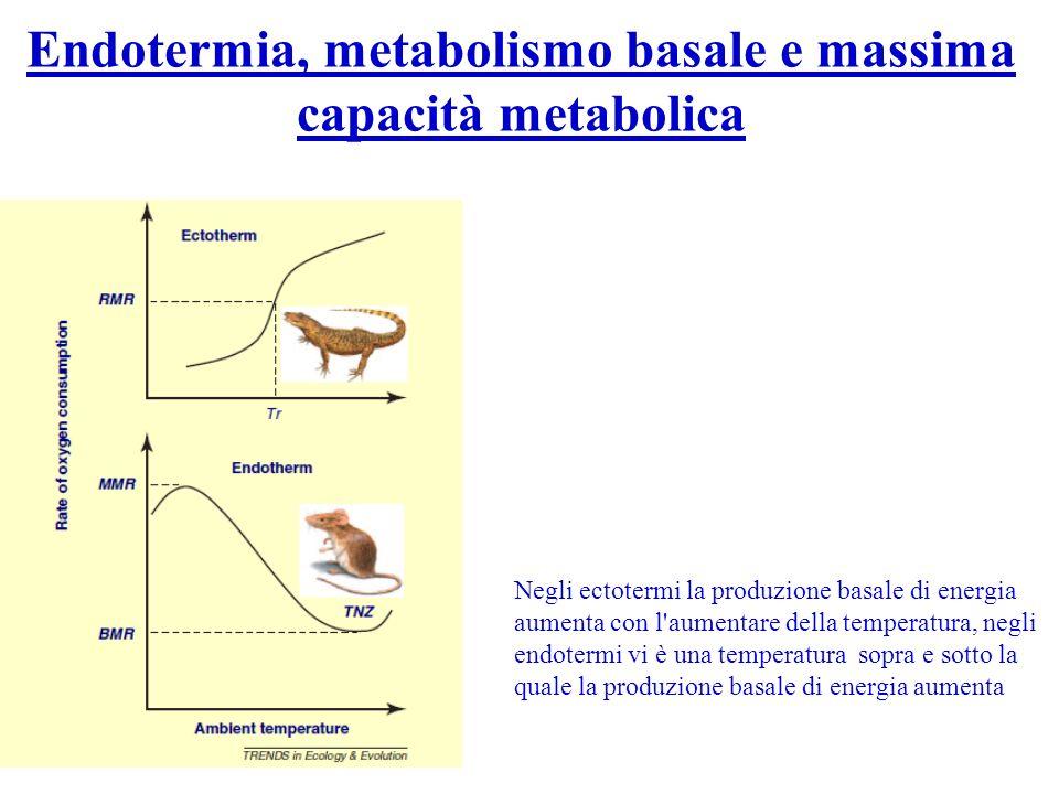 Endotermia, metabolismo basale e massima capacità metabolica