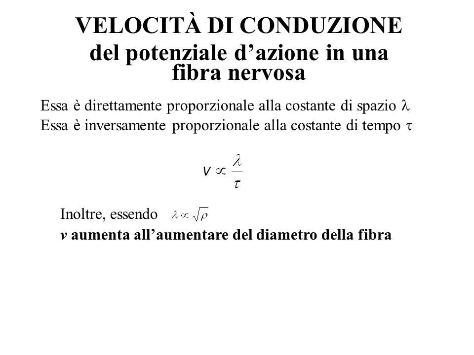 VELOCITÀ DI CONDUZIONE del potenziale d'azione in una fibra nervosa