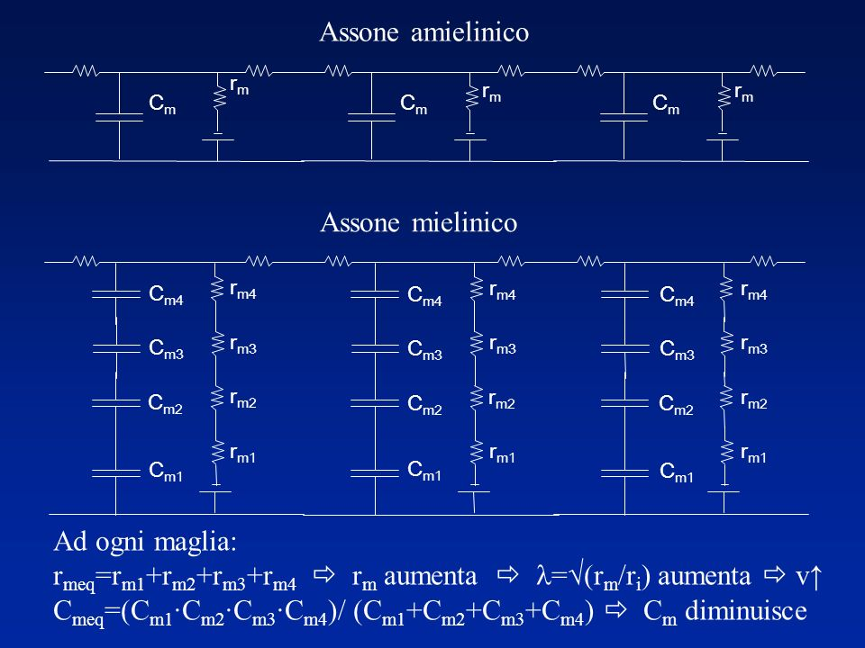 rmeq=rm1+rm2+rm3+rm4  rm aumenta  l=√(rm/ri) aumenta  v↑