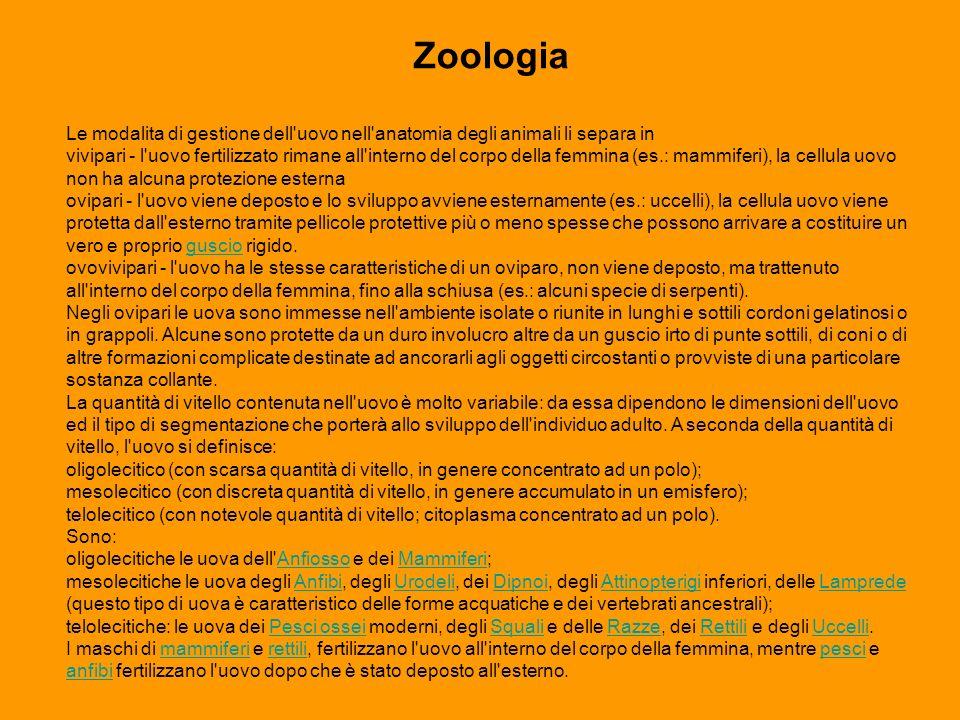 Zoologia Le modalita di gestione dell uovo nell anatomia degli animali li separa in.