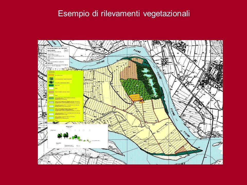 Esempio di rilevamenti vegetazionali