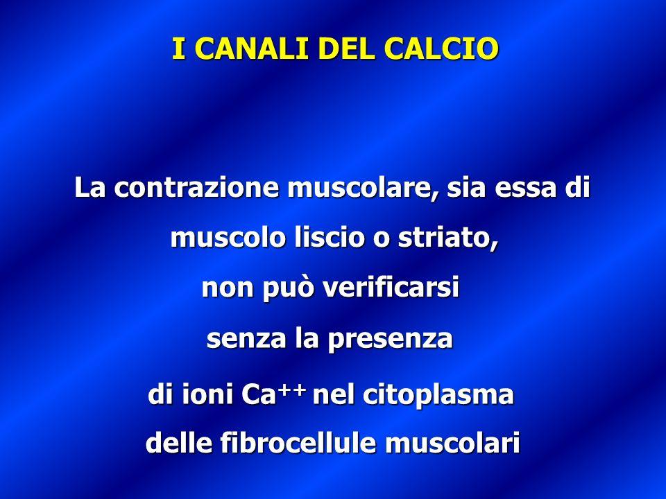 muscolo liscio o striato, di ioni Ca++ nel citoplasma