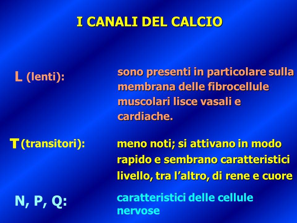 L N, P, Q: I CANALI DEL CALCIO T sono presenti in particolare sulla