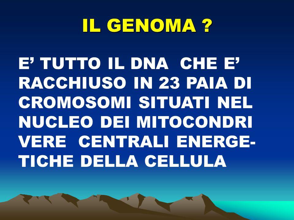 COSA E' IL CROMOSOMA E' la struttura intranucleare sede del DNA e di proteine che contengono i geni.
