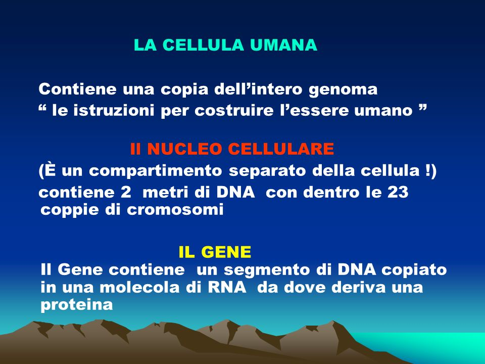 (sequenza del DNA nel Cromosoma)
