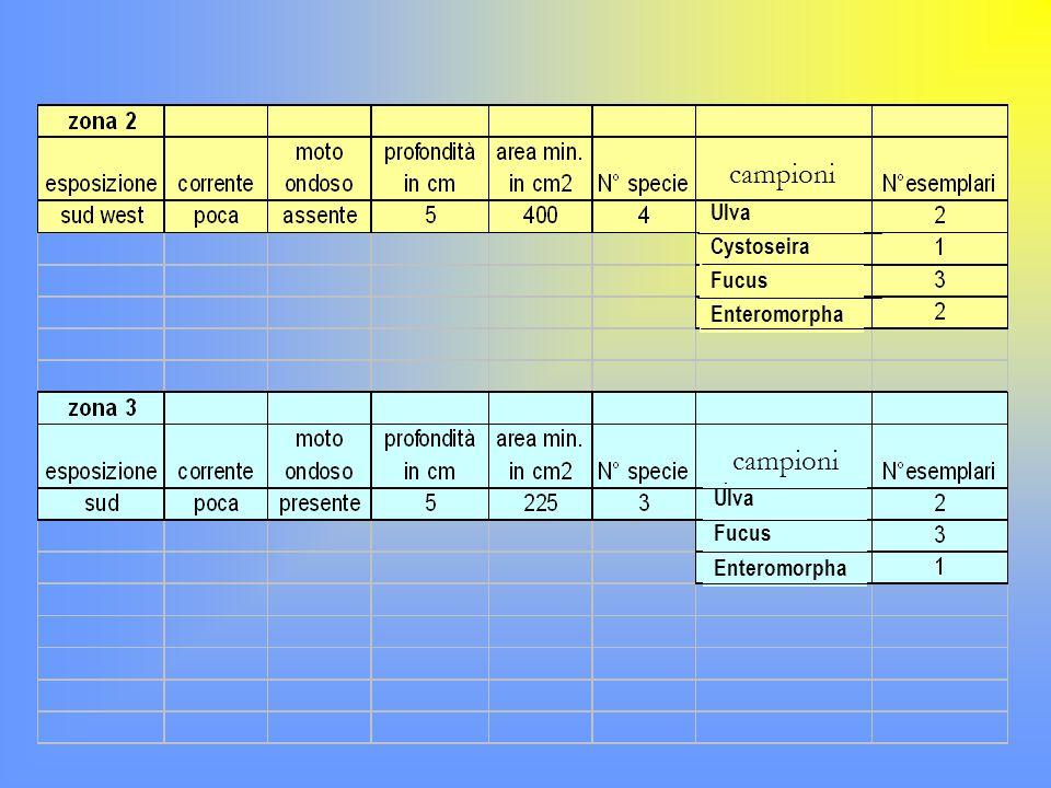 campioni Ulva Fucus Enteromorpha Cystoseira