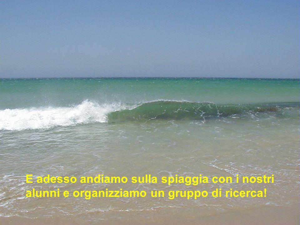 E adesso andiamo sulla spiaggia con i nostri alunni e organizziamo un gruppo di ricerca!