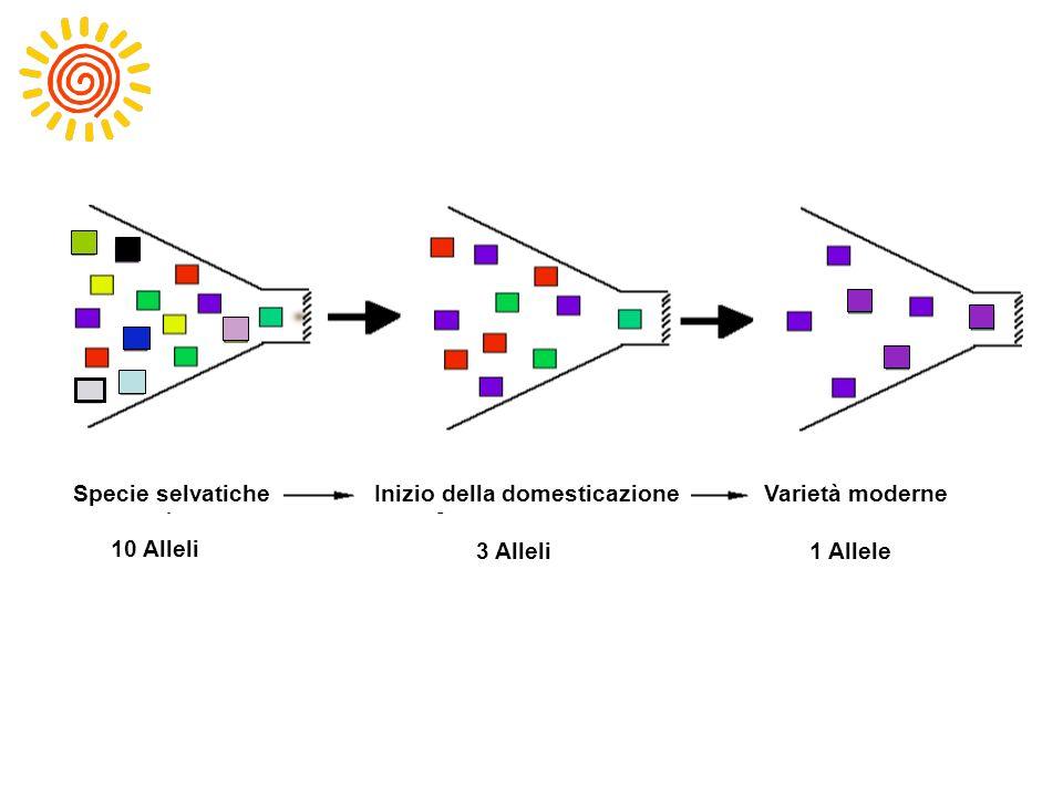 10 alleles 3 alleles 1 allele Inizio della domesticazione