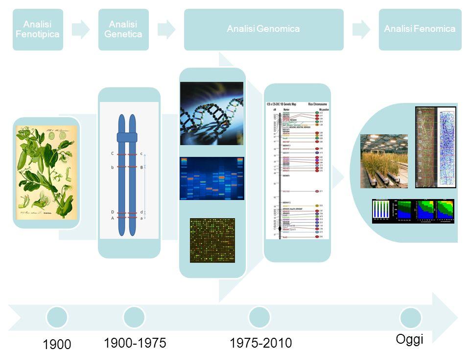 1900 1900-1975 1975-2010 Oggi 13 Analisi Fenotipica Analisi Genetica