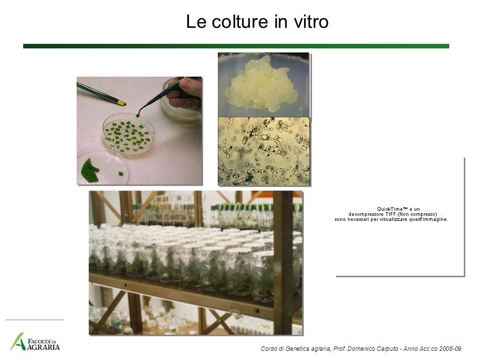 Le colture in vitro Corso di Genetica agraria, Prof. Domenico Carputo - Anno Acc.co 2008-09