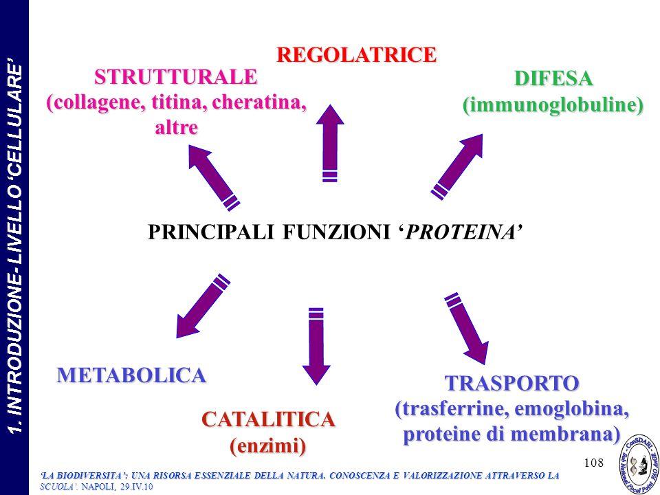 STRUTTURALE (collagene, titina, cheratina, altre