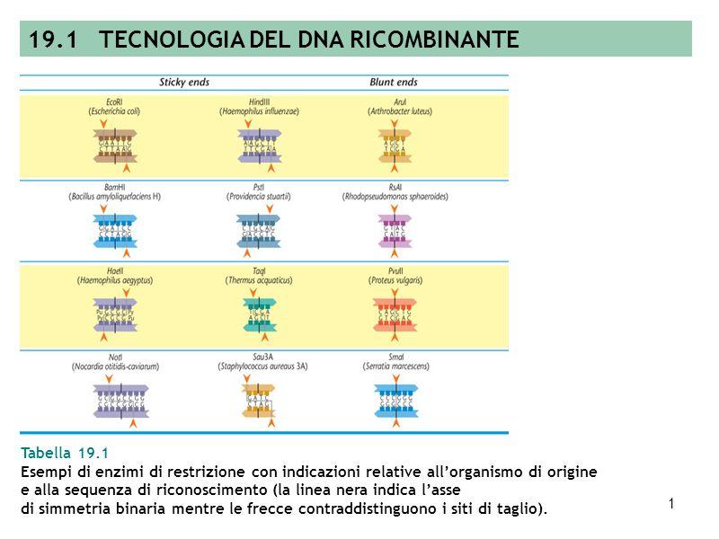 19.1 TECNOLOGIA DEL DNA RICOMBINANTE