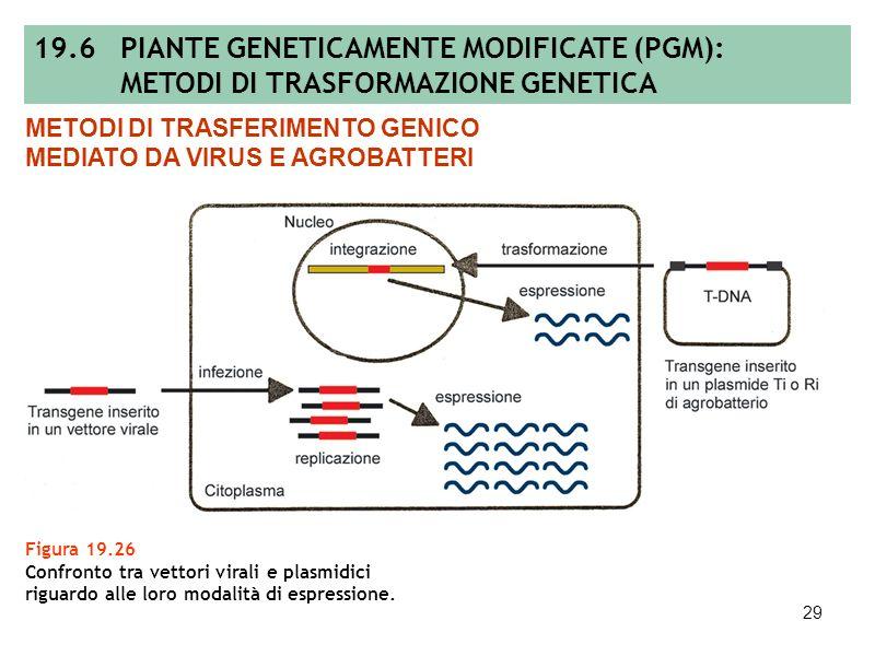 19.6 PIANTE GENETICAMENTE MODIFICATE (PGM):