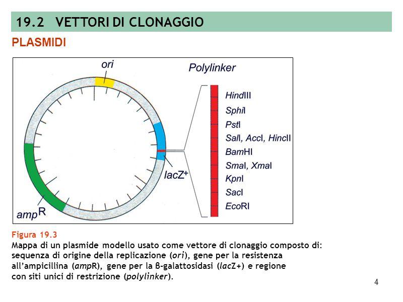 19.2 VETTORI DI CLONAGGIO PLASMIDI Figura 19.3