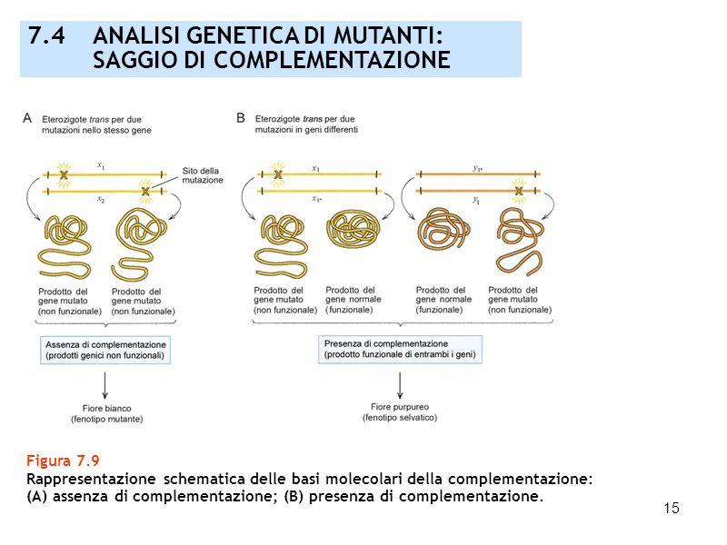 7.4 ANALISI GENETICA DI MUTANTI: SAGGIO DI COMPLEMENTAZIONE
