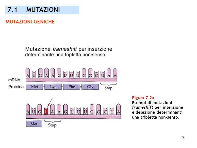 7.1 MUTAZIONI MUTAZIONI GENICHE Figura 7.2a Esempi di mutazioni