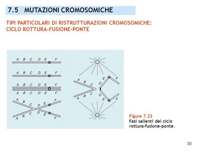 7.5 MUTAZIONI CROMOSOMICHE