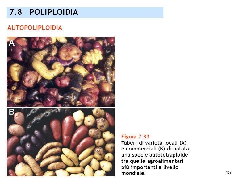 7.8 POLIPLOIDIA AUTOPOLIPLOIDIA Figura 7.33