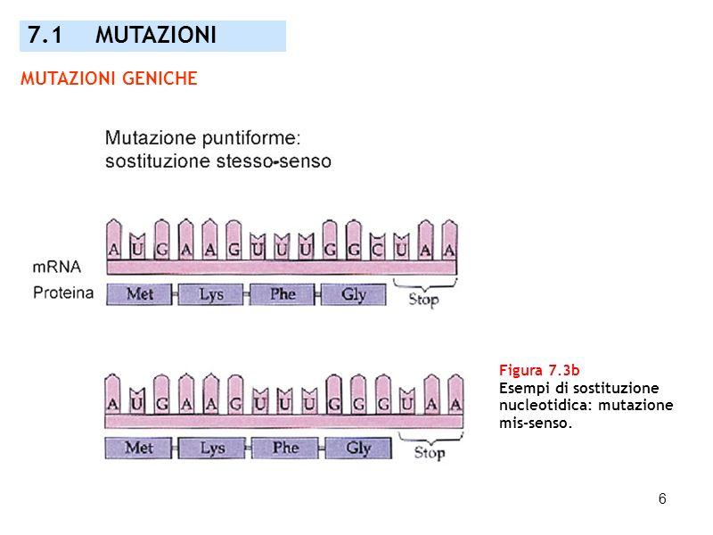 7.1 MUTAZIONI MUTAZIONI GENICHE Figura 7.3b Esempi di sostituzione