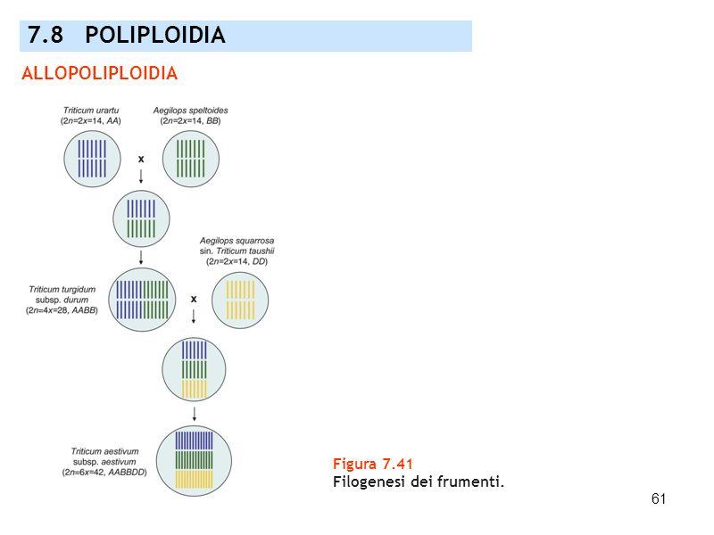 7.8 POLIPLOIDIA ALLOPOLIPLOIDIA Figura 7.41 Filogenesi dei frumenti.